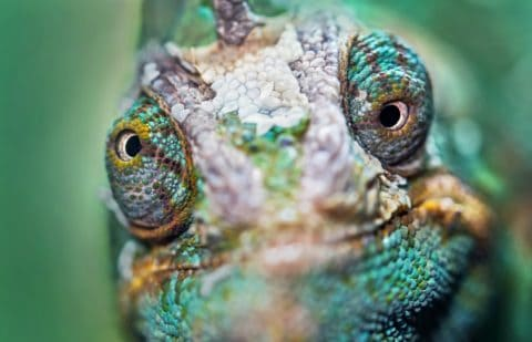 Adapt Presentations like a Chameleon on a Leaf