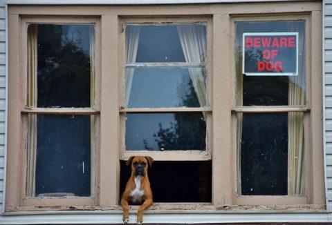 Presentation Guardian dog in window