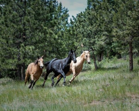 Presentation stress can feel like a herd of wild horses.